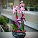 Magic Art Orkide