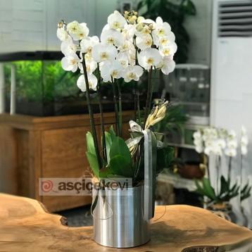 Metal Saksıda Orkideler