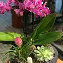 Rumeli Hisarı Orkide