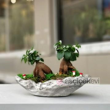 İkili Ginseng Bonsai