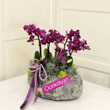 Beşiktaş Çiçek Mini Orkide