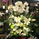 Orkideler ve lilyumlar