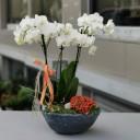 Orkide ve Nertera