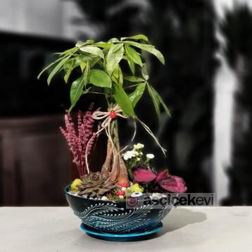 Kütahya Serisi Pachira Bonsai