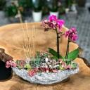 Taş Saksıda Orkide