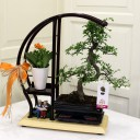 Sehpada Bonsai