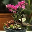 Mini Orkide Bahçe