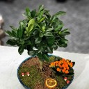 Minyatür Mandalina