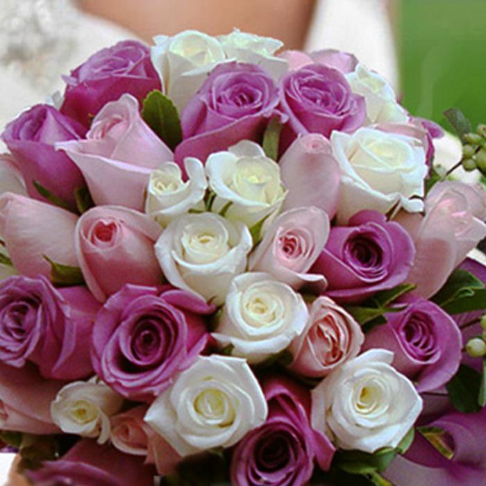 Eflatun Pembe Beyaz Gelin Çiçeği alt