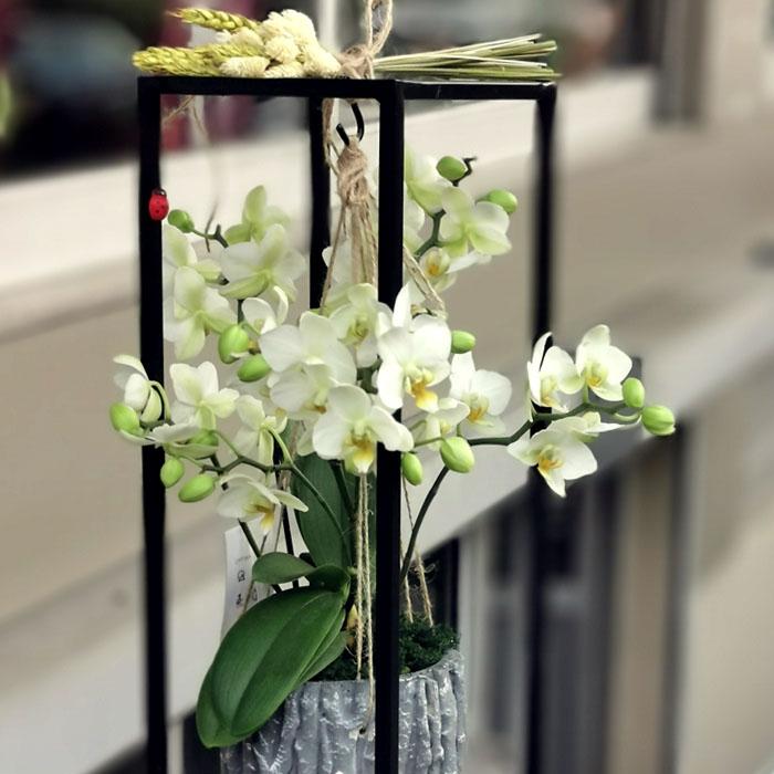 Sehpada Askılı Orkide alt