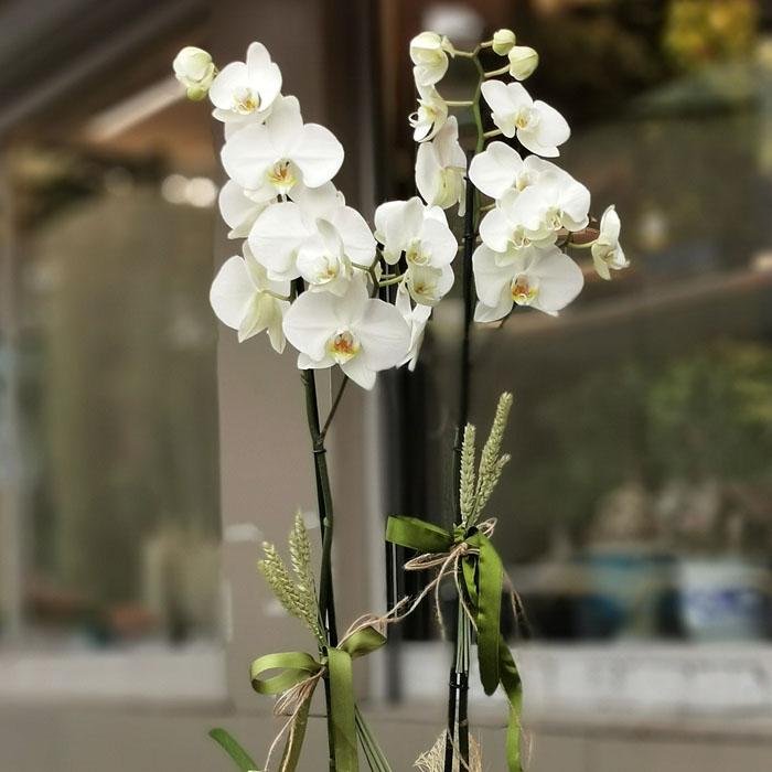 2 Dallı Beyaz Orkide alt