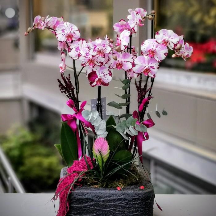 4 Dallı Magic Art Orkide alt