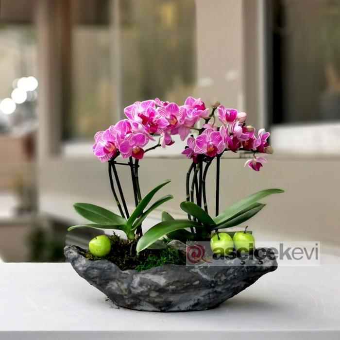 Pembe Mini Orkideler