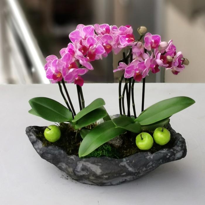 Pembe Mini Orkideler alt