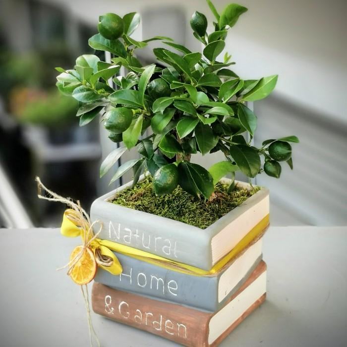 Kitapta Limon Ağacı alt