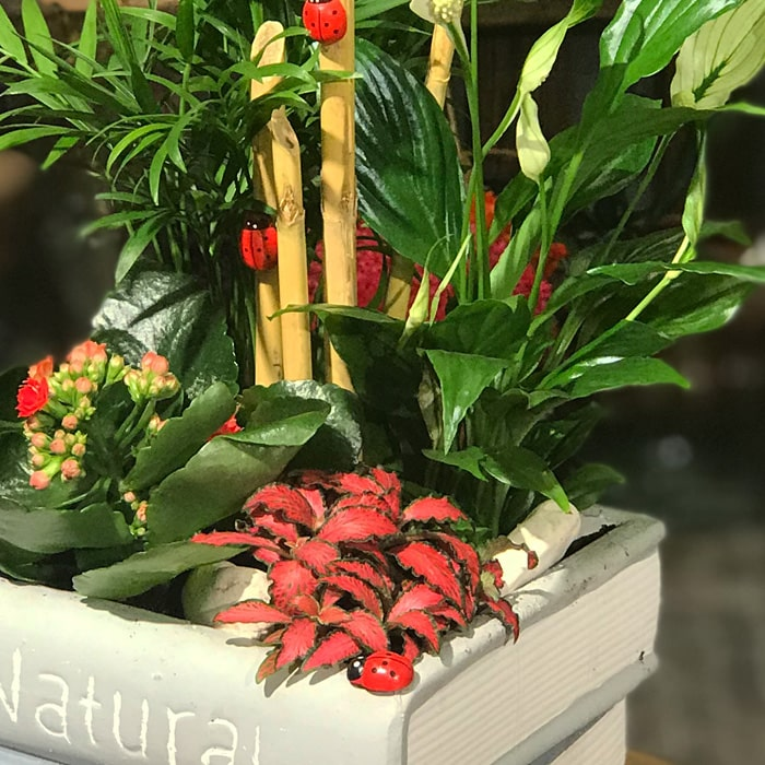 Kitapta Bitkiler alt