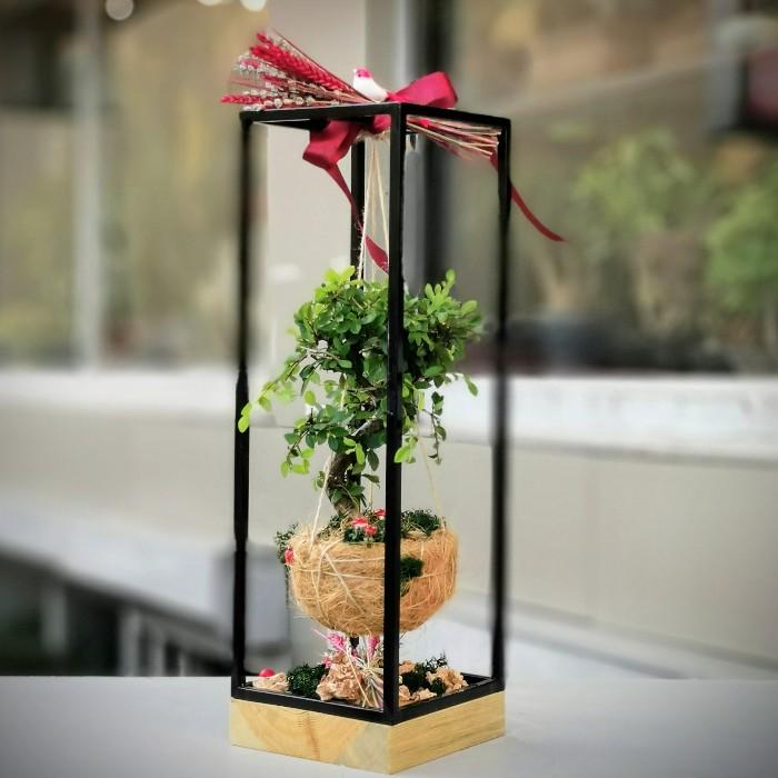 Kokedama Bonsai