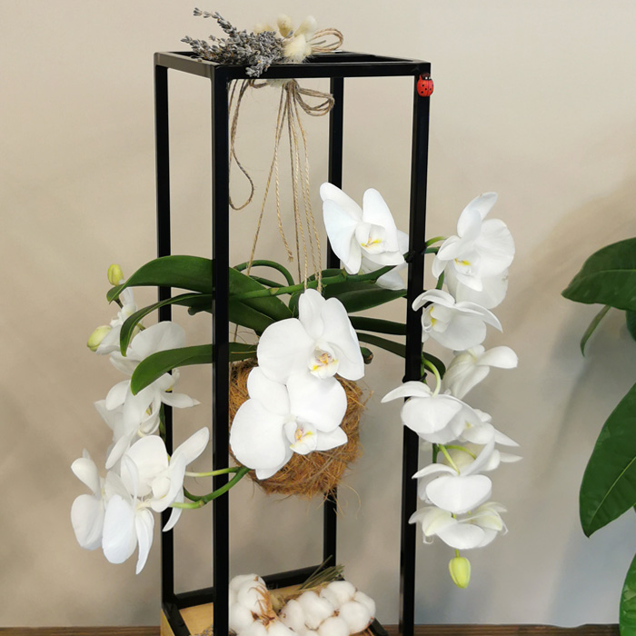 Kokedama Meander Orkide alt