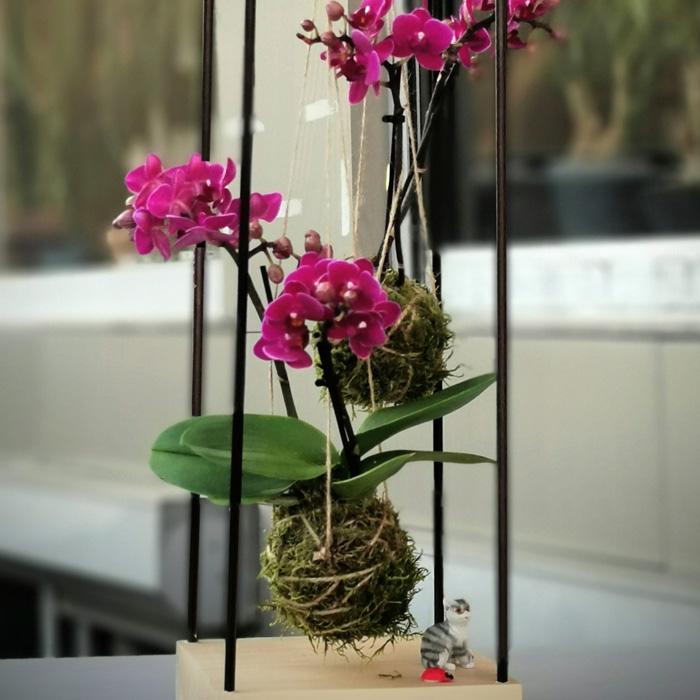 Kokedama Orkide alt