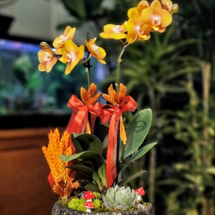 Las Vegas Orkide alt