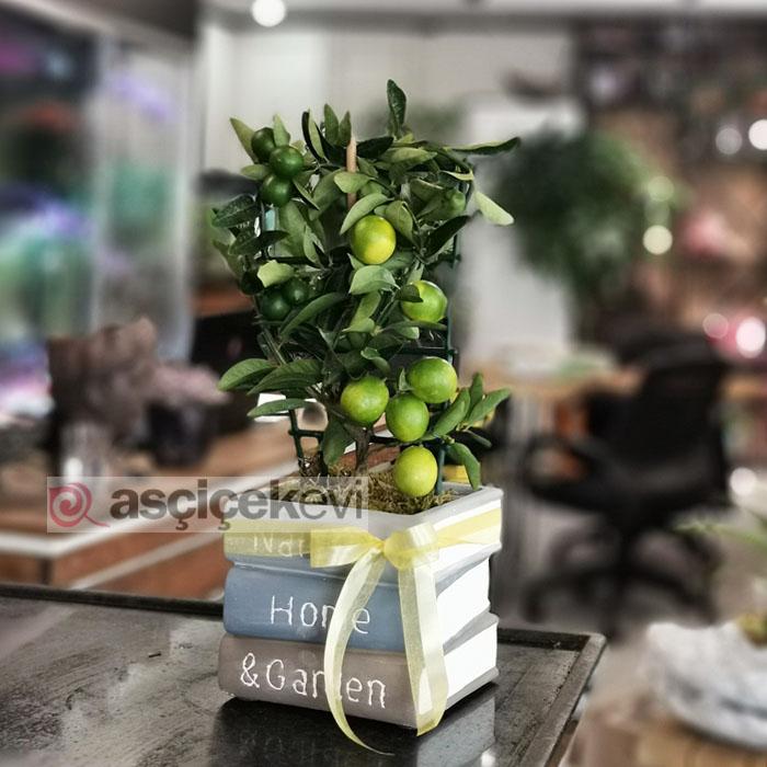 Kitapta Limon Ağacı