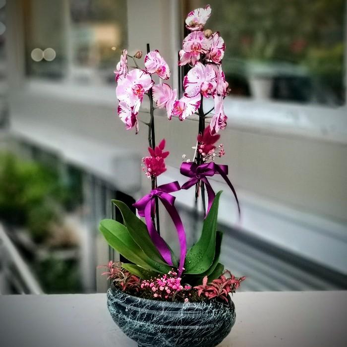 Magic Art Orkide alt