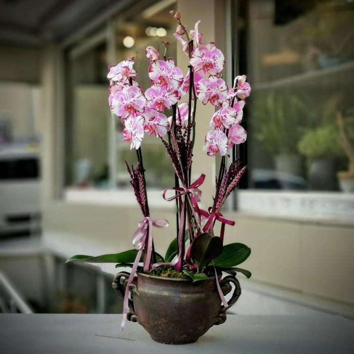4 Dallı Magic Art Orkide
