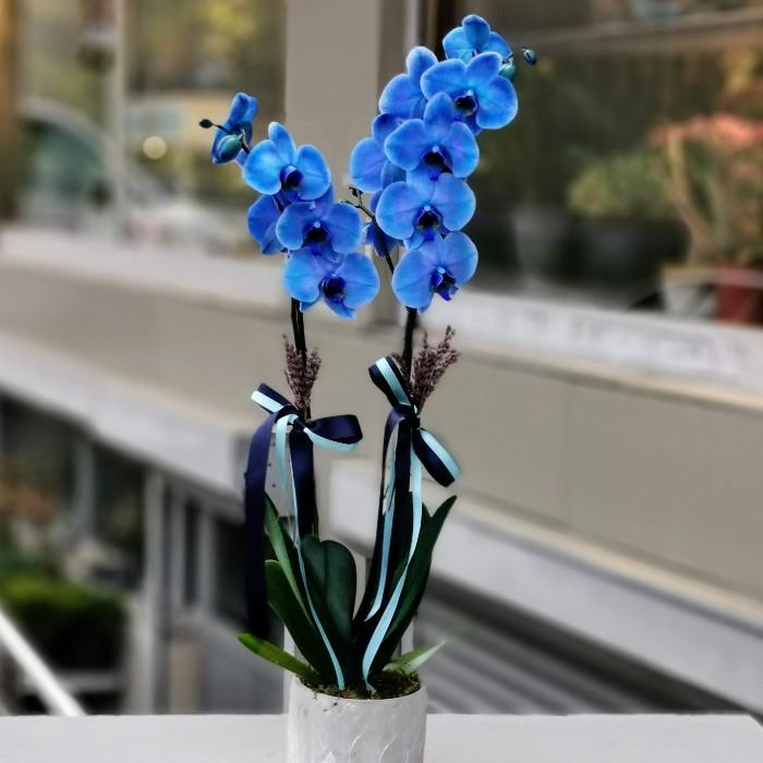 Mavi Orkide alt