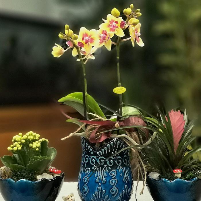 Kütahya Serisi - Sarı Orkide alt