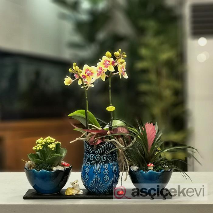 Kütahya Serisi - Sarı Orkide