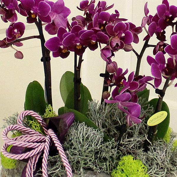 Beşiktaş Çiçek Mini Orkide alt