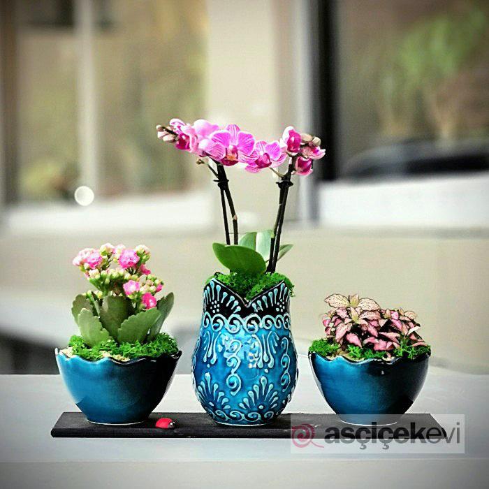Kütahya Serisi - Orkide Phitonia