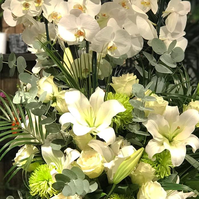 Orkideler ve lilyumlar alt