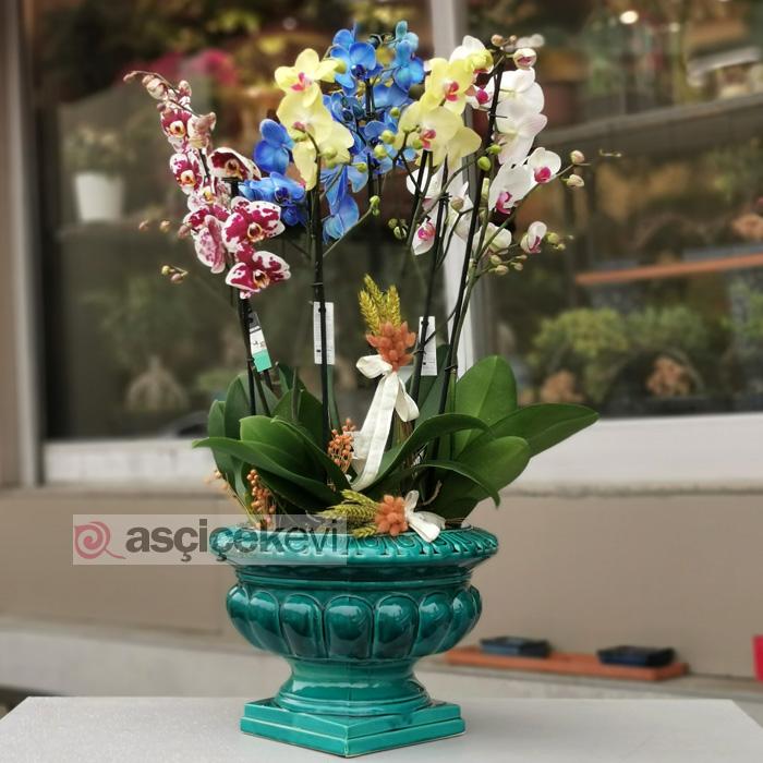 Özel Koleksiyon Rengarenk Orkideler