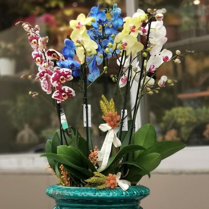 Özel Koleksiyon Rengarenk Orkideler alt