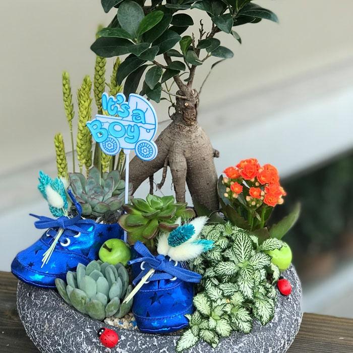 Bebek Çiçeği Teraryum - Erkek alt