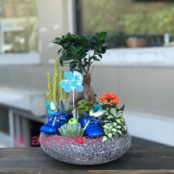 Bebek Çiçeği Teraryum - Erkek