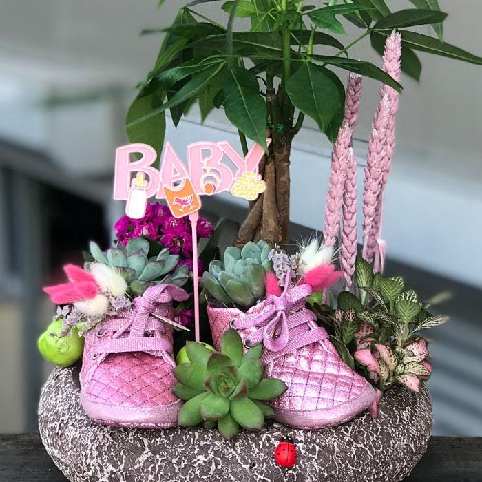 Bebek Çiçeği Teraryum - Kız alt