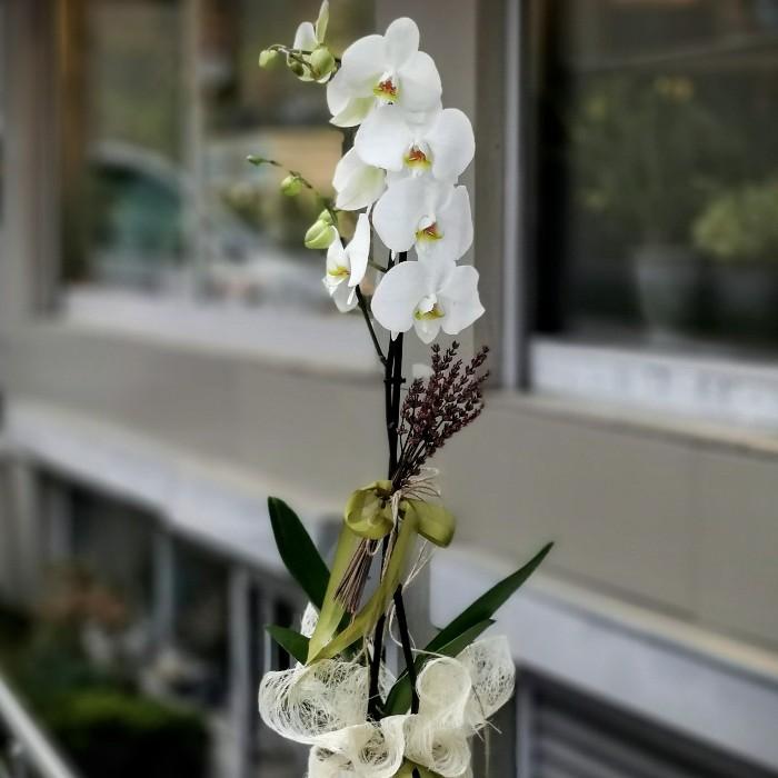 Tek Dallı Beyaz Orkide alt