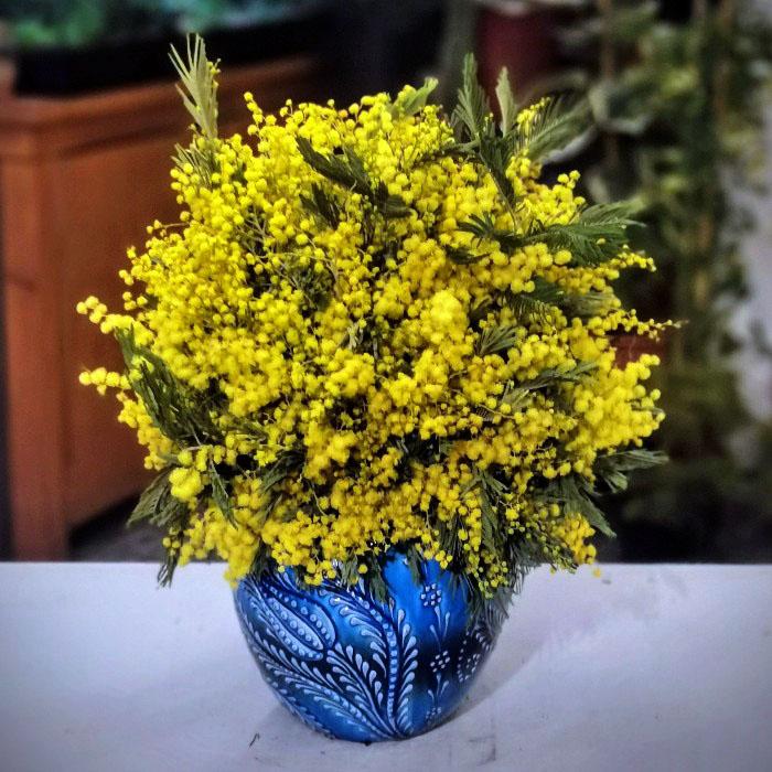 Mimoza Çiçeği alt